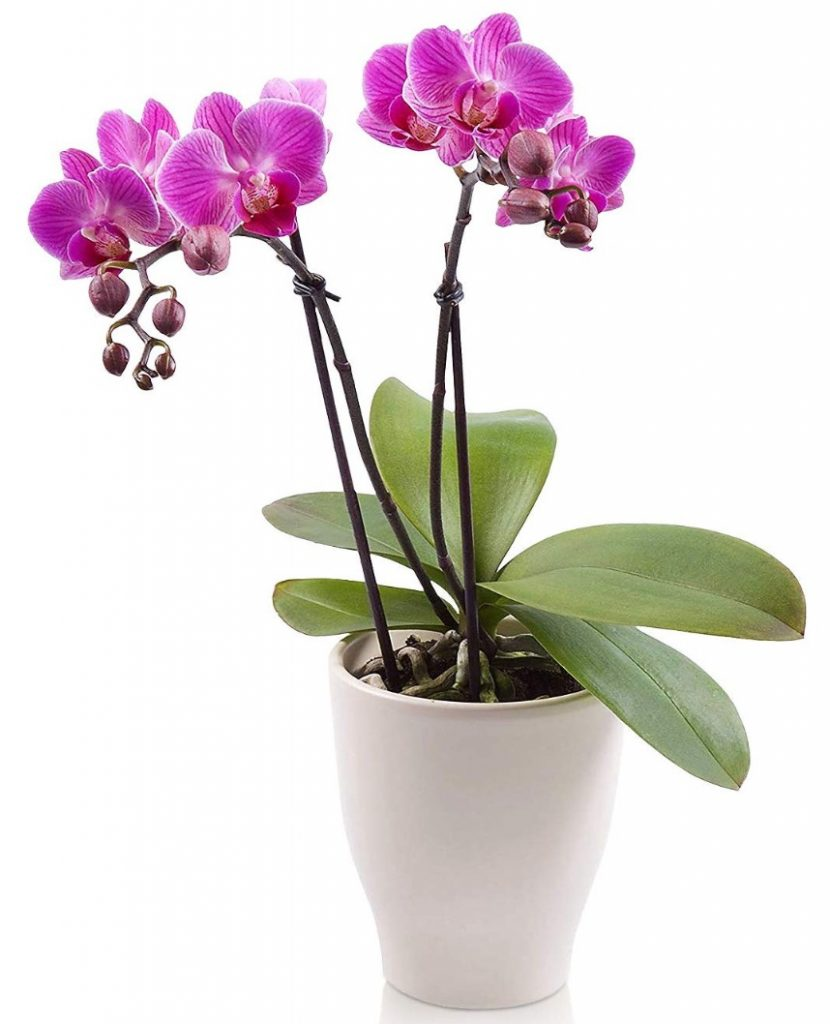 A Little Greenery for the Spa Double Stem Phalaenopsis Orchid #Spa #bathroom #HomeSpa #PamperYourself #SpaAccessories #MeTime #BathSpa #DIYHomeSpa #Relax #Soothing