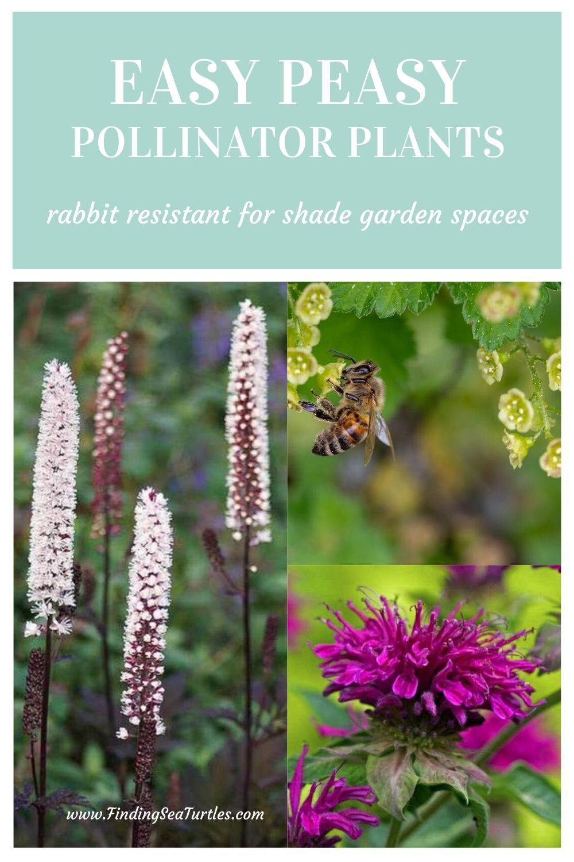 Easy Peasy Pollinator Plants rabbit resistant for shade garden spaces #PollinatorPlants #RabbitResistant #PlantsResistanttoRabbits #PlantsforPollinators #Gardening #Perennials