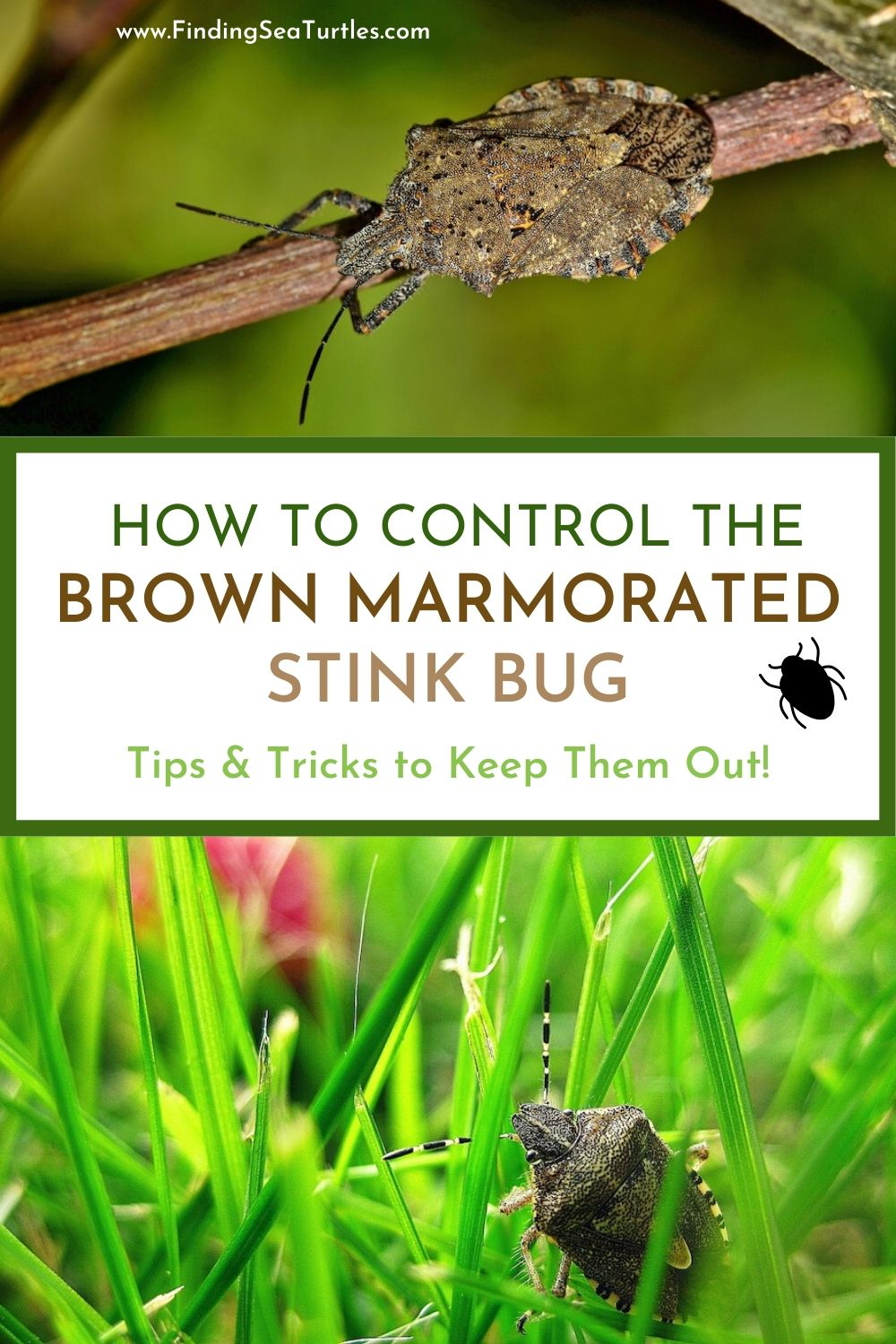 How to Control the Brown Marmorated Stink Bug #Garden #Plants #Gardening #GardenPests #StinkBugs #StoptheBMSB #ControltheStinkBug