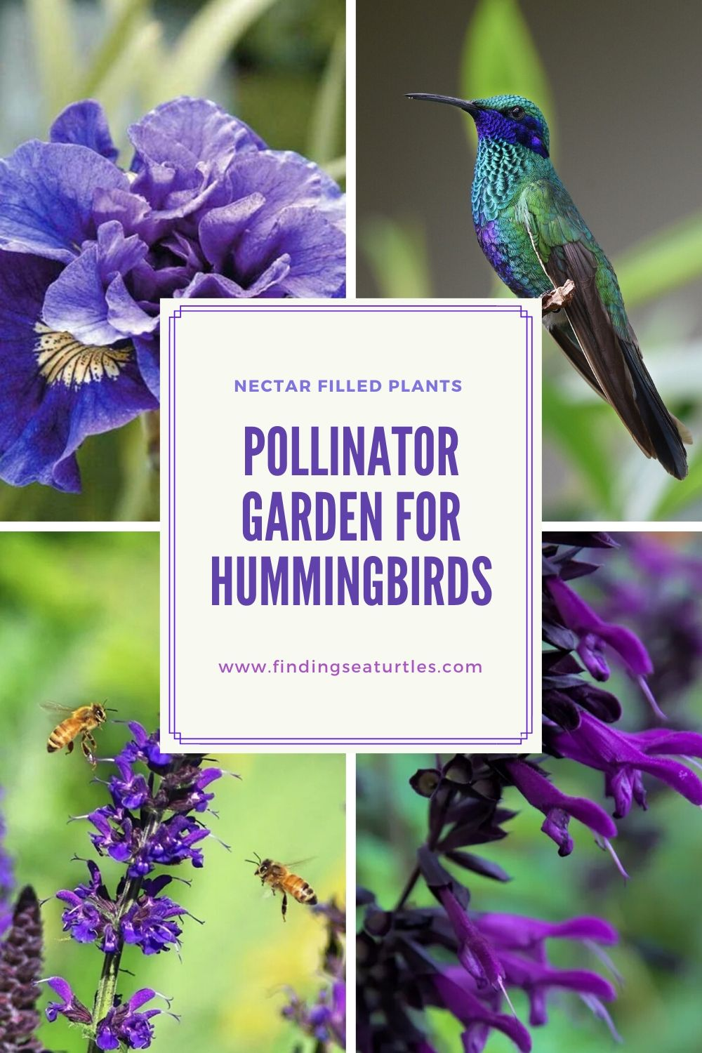 Nectar Filled Plants Pollinator Garden for Hummingbirds #Hummingbirds #Garden #Gardening #Plants #GardenPollinators #AttractHummingbirds #NectarRichPlants #BeneficialForPollinators