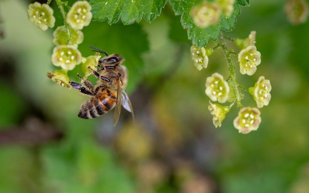 Pollinator Plants that are Rabbit Resistant #PollinatorPlants #RabbitResistant #PlantsResistanttoRabbits #PlantsforPollinators #Gardening #Perennials