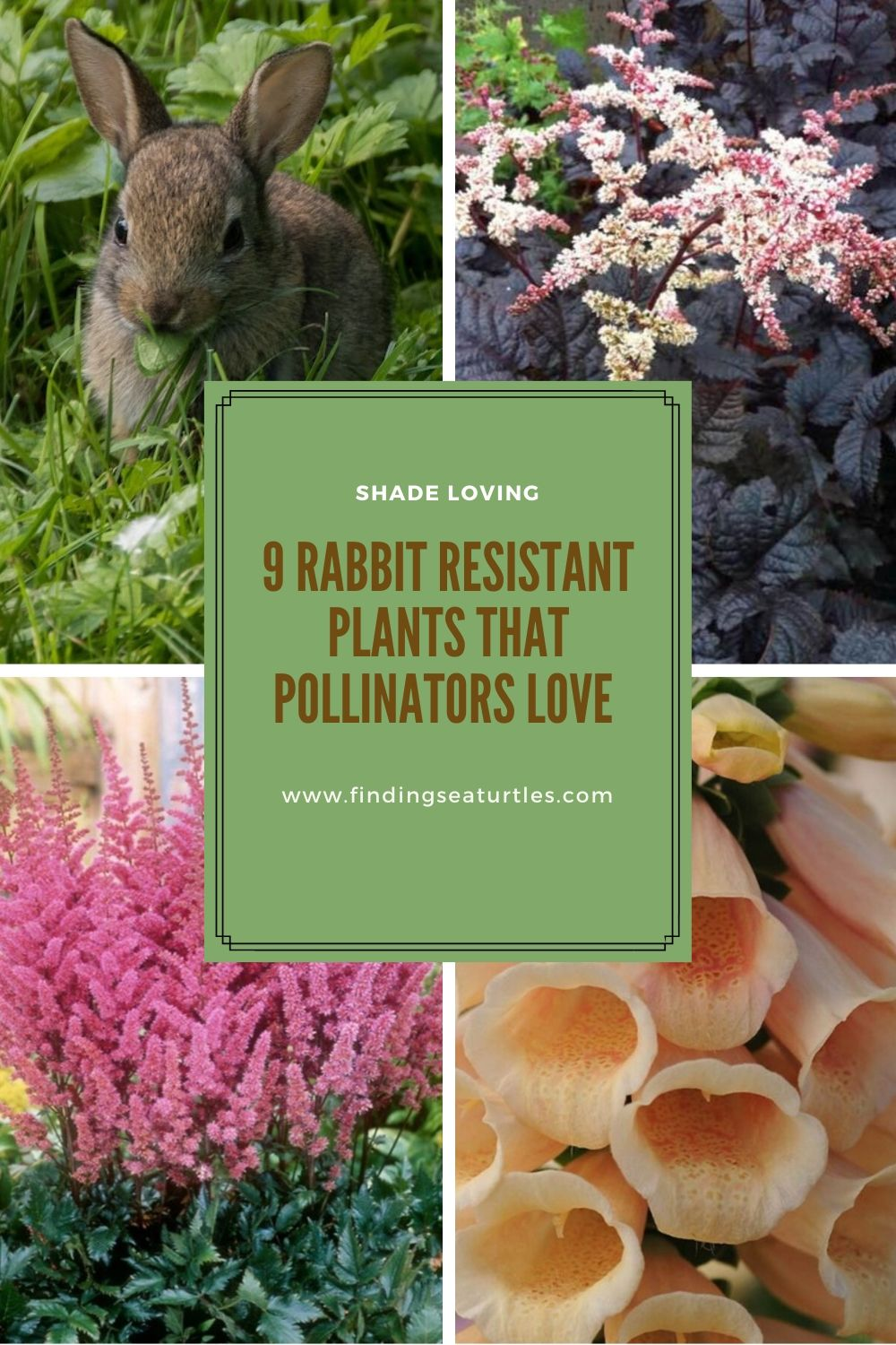 Pollinator Plants That Are Rabbit Resistant Finding Sea Turtles