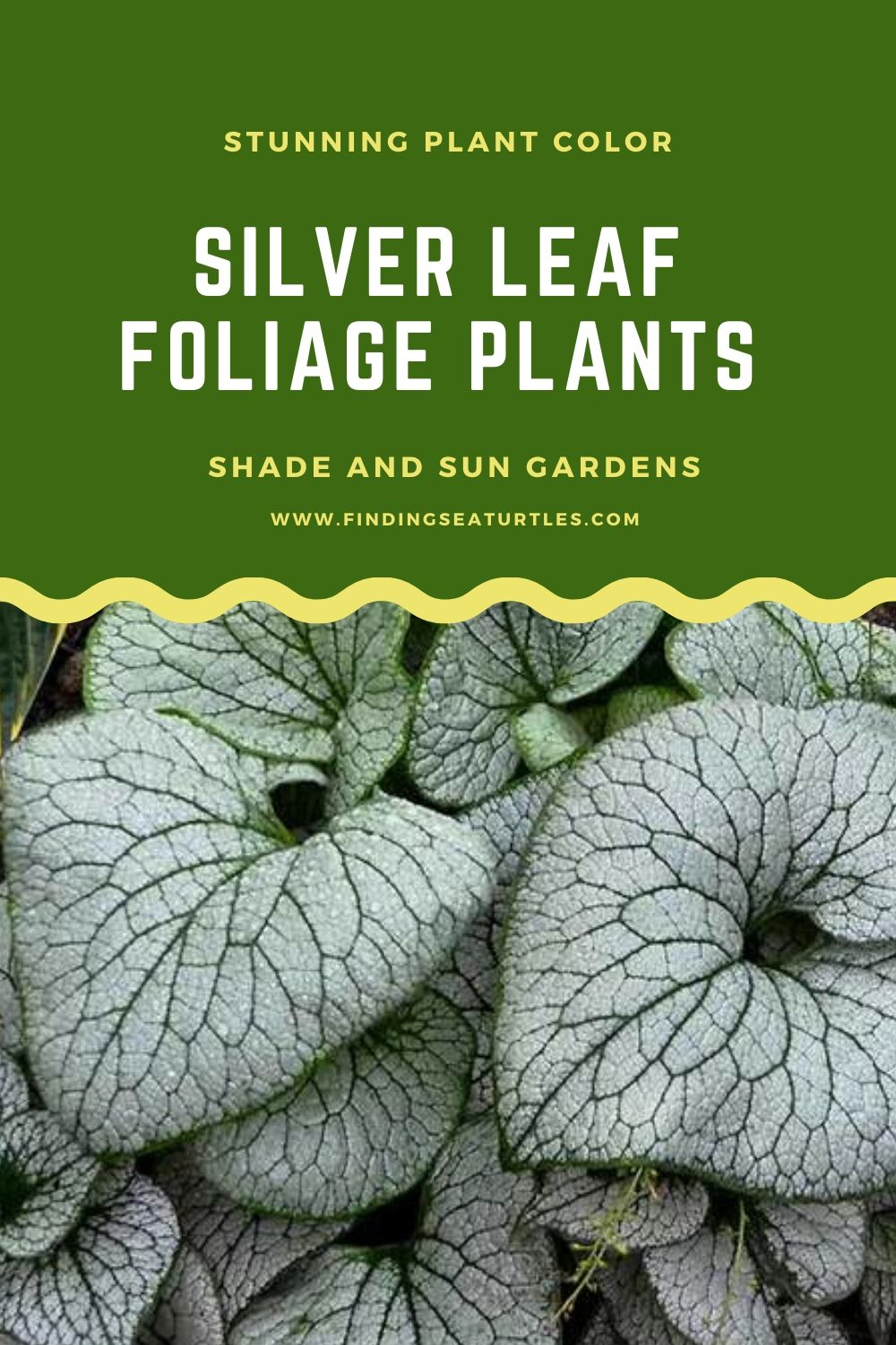 Stunning Plant Color SILVER LEAF FOLIAGE PLANTS Shade and Sun Gardens #SilverFoliage #PlantswithSilverLeaves #DramaticFoliagePlants #Gardening #Landscapes #SilverLeafPlants
