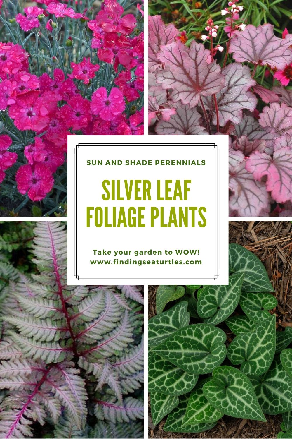 Sun and Shade Perennials SILVER LEAF FOLIAGE PLANTS Take your garden to wow #SilverFoliage #PlantswithSilverLeaves #DramaticFoliagePlants #Gardening #Landscapes #SilverLeafPlants