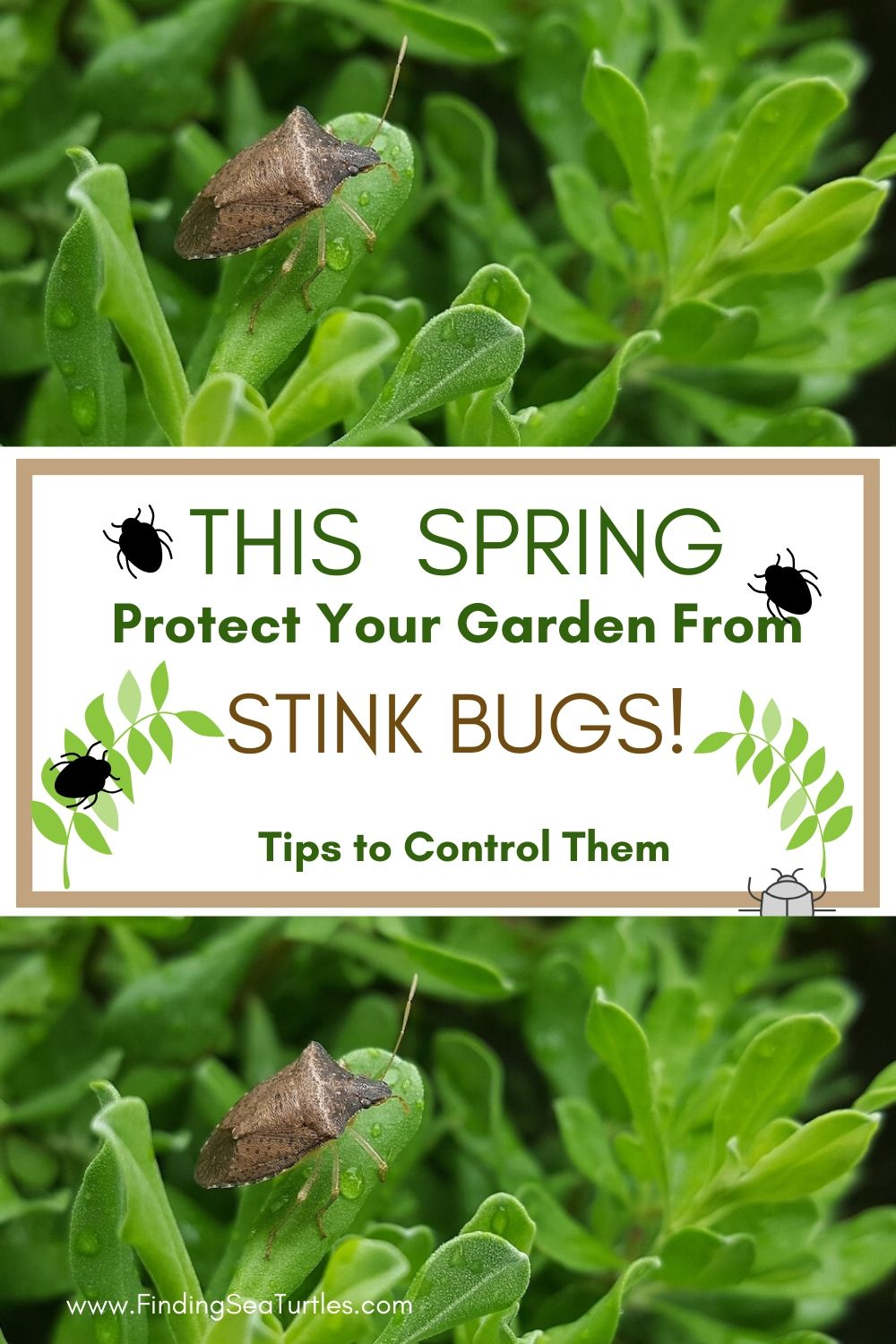 This Spring Protect Your Garden From Stink Bugs #Garden #Plants #Gardening #GardenPests #StinkBugs #StoptheBMSB #ControltheStinkBug