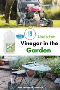 19 Uses for Vinegar in the Garden #VinegarUses #Gardening #AllNaturalCleaning #SaveMoney #SaveTime #BudgetFriendly #NonToxic #EnvironmentallyFriendly #PatioCleaning #VinegarCleaning