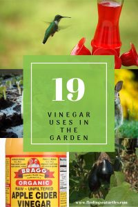 19 Vinegar Uses in the Garden #VinegarUses #Gardening #AllNaturalCleaning #SaveMoney #SaveTime #BudgetFriendly #NonToxic #EnvironmentallyFriendly #PatioCleaning #VinegarCleaning