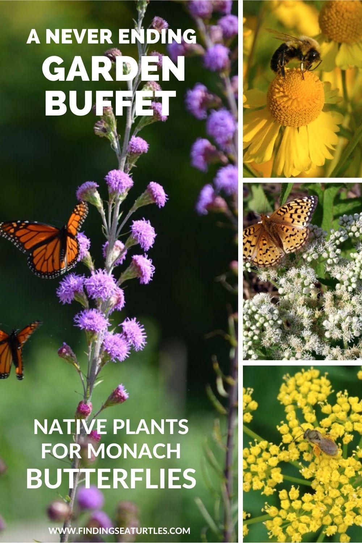 A Never Ending Garden Buffet Native Plants for Monarch Butterflies #MonarchButterflies #Butterflies #SavetheMonarchs #Gardening #Plants #GardenPollinators #AttractMonarchButterflies #NectarRichPlants #BeneficialForPollinators