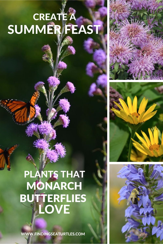 Create a Summer Feast Plants that Monarch Butterflies Love #MonarchButterflies #Butterflies #SavetheMonarchs #Gardening #Plants #GardenPollinators #AttractMonarchButterflies #NectarRichPlants #BeneficialForPollinators
