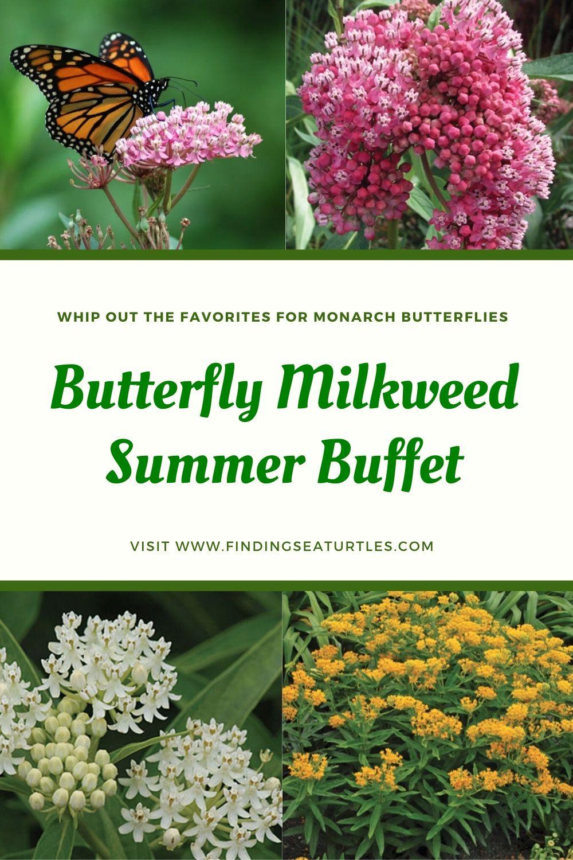 Whip out the Favorites for Monarch Butterflies Butterfly Milkweed Summer Buffet #MonarchButterflies #Butterflies #Garden #Gardening #Plants #GardenPollinators #AttractMonarchButterflies #NectarRichPlants #BeneficialForPollinators