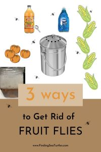 3 ways to Get Rid of Fruit Flies #Clean #CleanHome #CleanWithVinegar #AppleCiderVinegar #EliminateBugswithVinegar #SaveMoney #SaveTime #FrugalLiving #FrugalHome