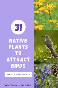 31 Native Plants to Attract Birds Bird Loving Plants #Native #NativePlants #NativeGardening #AttractBirds #PlantsForBirds #PlantsForWildlife #BeneficialForPollinators #GardeningForPollinators