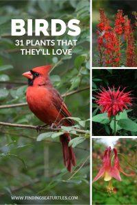 Birds 31 Plants that they'll love #Native #NativePlants #NativeGardening #AttractBirds #PlantsForBirds #PlantsForWildlife #BeneficialForPollinators #GardeningForPollinators