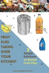Fruit Flies taking over your Kitchen_ 3 Simple Solutions #Clean #CleanHome #CleanWithVinegar #AppleCiderVinegar #EliminateBugswithVinegar #SaveMoney #SaveTime #FrugalLiving #FrugalHome