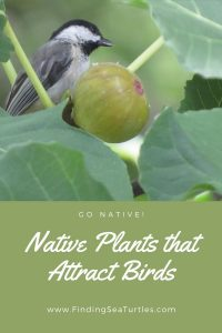 Go Native Native Plants that Attract Birds #Native #NativePlants #NativeGardening #AttractBirds #PlantsForBirds #PlantsForWildlife #BeneficialForPollinators #GardeningForPollinators