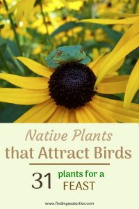 Native Plants that attract birds 31 plants for a feast #Native #NativePlants #NativeGardening #AttractBirds #PlantsForBirds #PlantsForWildlife #BeneficialForPollinators #GardeningForPollinators