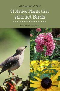 Natives do it Best 31 Native Plants that Attract Birds #Native #NativePlants #NativeGardening #AttractBirds #PlantsForBirds #PlantsForWildlife #BeneficialForPollinators #GardeningForPollinators