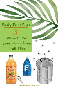 Pesky Fruit Flies 3 Ways to Rid Your Home from Fruit Flies #Clean #CleanHome #CleanWithVinegar #AppleCiderVinegar #EliminateBugswithVinegar #SaveMoney #SaveTime #FrugalLiving #FrugalHome