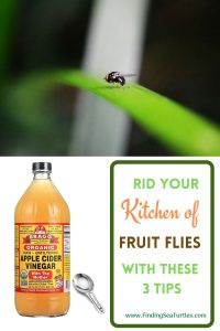 Rid your Kitchen of Fruit Flies with these 3 tips #Clean #CleanHome #CleanWithVinegar #AppleCiderVinegar #EliminateBugswithVinegar #SaveMoney #SaveTime #FrugalLiving #FrugalHome
