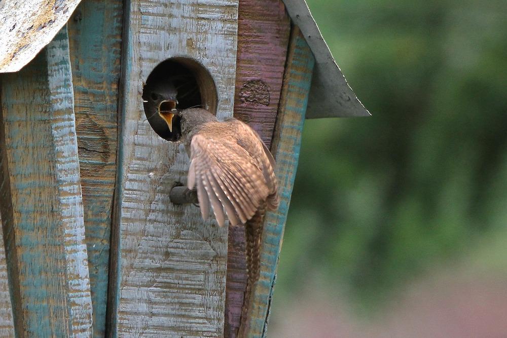 Garden Wildlife Wren Family Birdhouse #SpringGarden #Gardening #SpringCleaning #SprngGardenCleaning #SpringChores #BenefitsofGardening #GardenWorkOut