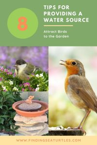 8 Tips for Providing a Water Source Attract Birds to Garden #Wildlife #NativePlants #Gardening #AttractBirds #WaterSourceForBirds #WaterForWildlife #BeneficialForPollinators #GardeningForPollinators
