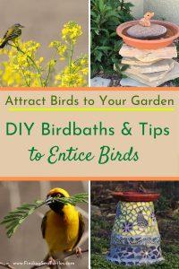 Attract Birds to Your Garden DIY Birdbaths Tips #Wildlife #NativePlants #Gardening #AttractBirds #WaterSourceForBirds #WaterForWildlife #BeneficialForPollinators #GardeningForPollinators