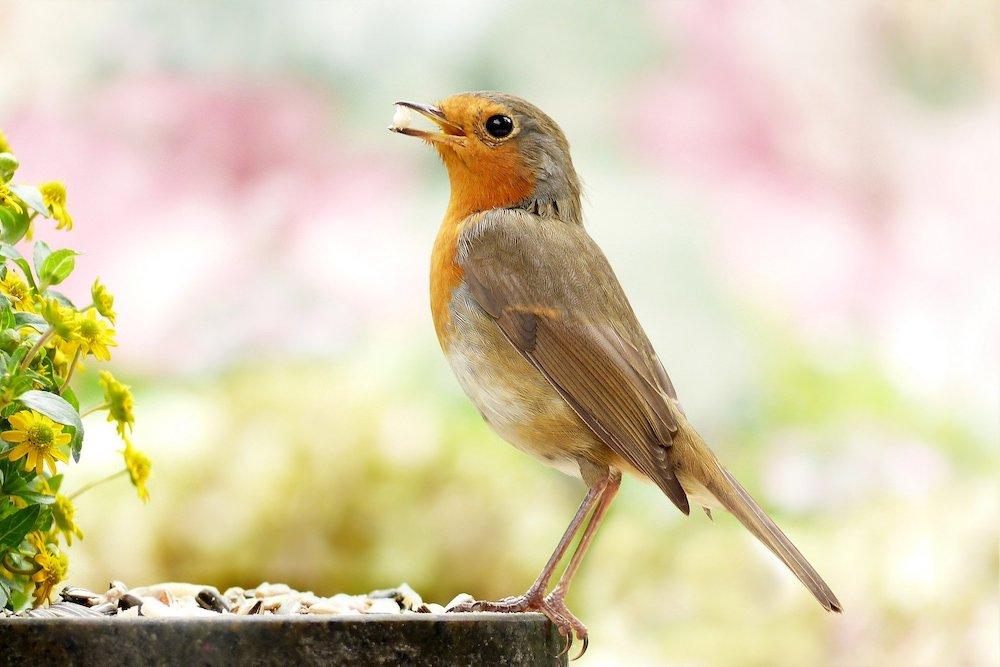Bird Eating Seeds #Wildlife #NativePlants #Gardening #AttractBirds #WaterSourceForBirds #WaterForWildlife #BeneficialForPollinators #GardeningForPollinators