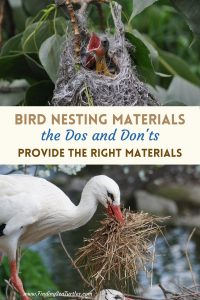 Bird Nesting Materials the Dos and Don'ts #Wildlife #NativePlants #Gardening #Birds #AttractBirds #NestingMaterials #NestBuilding #BeneficialForPollinators #GardeningForPollinators
