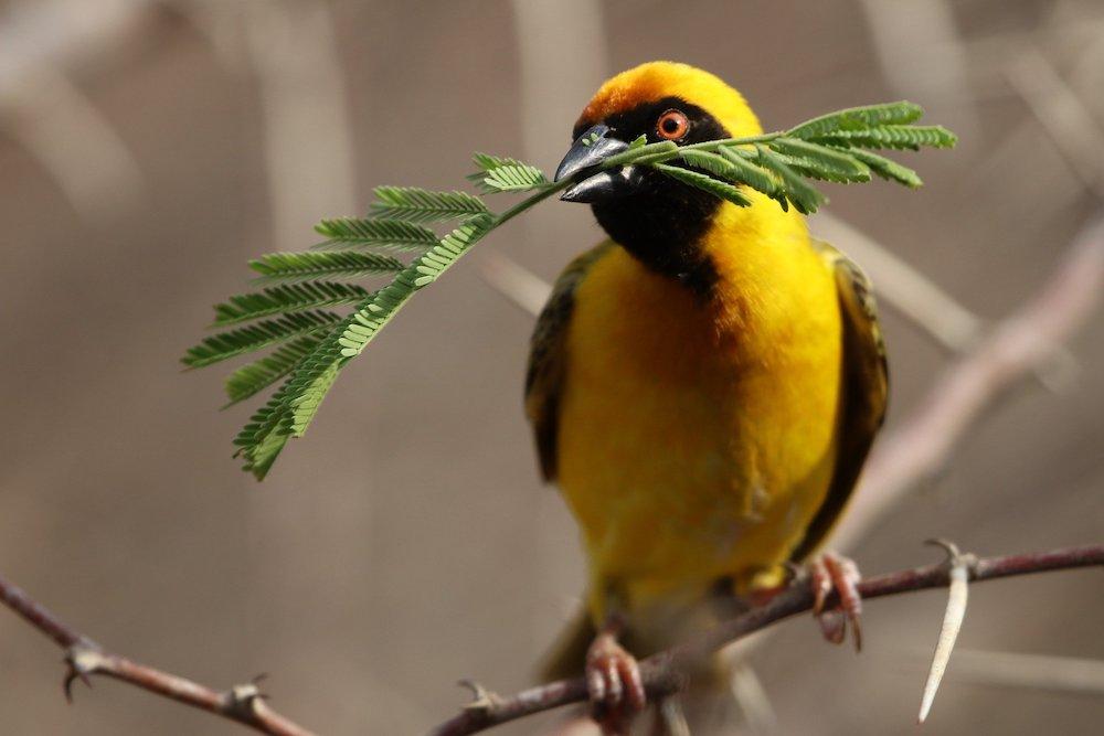 Create a Habitat for Birds #Wildlife #NativePlants #Gardening #AttractBirds #WaterSourceForBirds #WaterForWildlife #BeneficialForPollinators #GardeningForPollinators