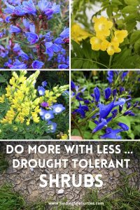 Do More with Less Drought Tolerant Shrubs #Garden #Gardening #DroughtTolerant #DroughtResistant #BeneficialForPollinators #GardeningForPollinators #Waterwise #WaterWiseGarden