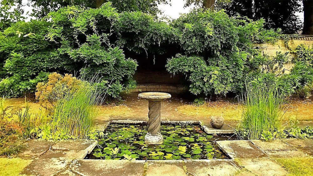 How to Provide a Reliable Water Source for Birds Garden Birdbath with nearby Shrubs for Cover #Wildlife #NativePlants #Gardening #AttractBirds #WaterSourceForBirds #WaterForWildlife #BeneficialForPollinators #GardeningForPollinators