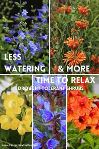 Less Watering More Time to Relax Drought Tolerant Shrubs #Garden #Gardening #DroughtTolerant #DroughtResistant #BeneficialForPollinators #GardeningForPollinators #Waterwise #WaterWiseGarden