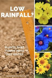 Low Rainfall Plants that Thrive with less Water #Gardening #DroughtTolerant #DroughtResistant #BeneficialForPollinators #GardeningForPollinators #Waterwise #WaterWiseGarden
