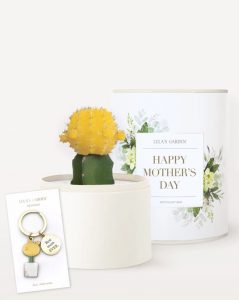 Best Online Flowers and Plants - Ever Gift Set by Lulas Garden #flowers #flowerdelivery #bouquets #OnlineFlowers #FlowersOnline #MothersDay #FlowersForMom #GiveMomFlowers