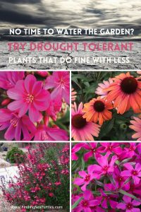 NO TIME TO WATER THE GARDEN_ Try Drought Tolerant Plants that do fine with less #Gardening #DroughtTolerant #DroughtResistant #BeneficialForPollinators #GardeningForPollinators #Waterwise #WaterWiseGarden