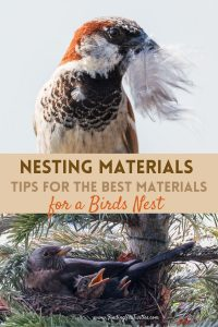 Nesting Materials Tips for the Best Materials for a Birds Nest #Wildlife #NativePlants #Gardening #Birds #AttractBirds #NestingMaterials #NestBuilding #BeneficialForPollinators #GardeningForPollinators
