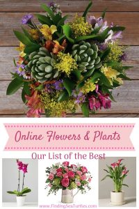 Online Flowers and Plants Our List of the Best #flowers #flowerdelivery #bouquets #OnlineFlowers #FlowersOnline #MothersDay #FlowersForMom #GiveMomFlowers