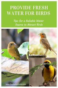 Provide Fresh Water for Birds Tips for a Reliable Water Source to Attract Birds #Wildlife #NativePlants #Gardening #AttractBirds #WaterSourceForBirds #WaterForWildlife #BeneficialForPollinators #GardeningForPollinators