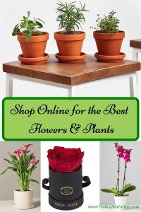 Shop Online for the Best Flowers & Plants #flowers #flowerdelivery #bouquets #OnlineFlowers #FlowersOnline #MothersDay #FlowersForMom #GiveMomFlowers