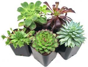 Succulent Plants set #DIY #Patio #DIYPatio #DIYPatioRefresh #Decor #PatioDecor #OutdoorDecor