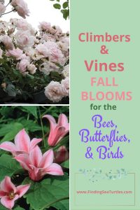 Climbers Vines Fall Blooms for the Bees Butterflies Birds #Vines #FallBlooming #FallBloomingVines #VinesForPollinators #PollinatorVines #FallFlowers #Gardening #FallisForPlanting