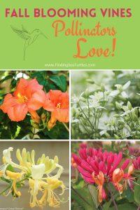 Fall Blooming Vines Pollinators Love #Vines #FallBlooming #FallBloomingVines #VinesForPollinators #PollinatorVines #FallFlowers #Gardening #FallisForPlanting