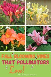 Fall Blooming Vines that Pollinators Love #Vines #FallBlooming #FallBloomingVines #VinesForPollinators #PollinatorVines #FallFlowers #Gardening #FallisForPlanting
