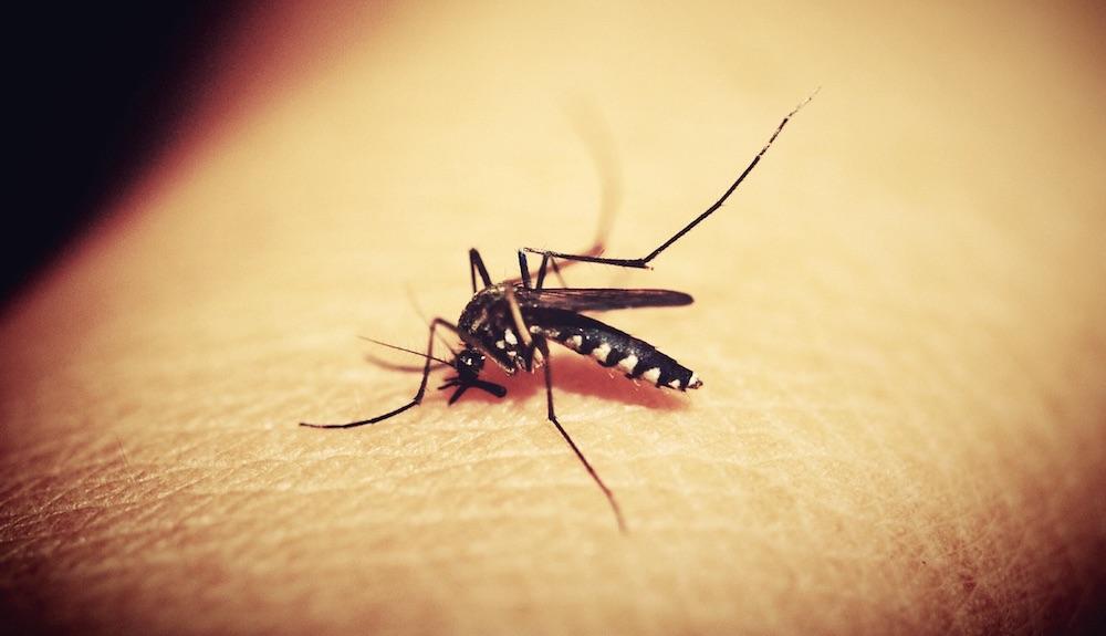 Effective Bug Control Mosquito Control #Bats #BenefitsofBats #InsectControl #Pollinators #Gardening #SeedDispersal #OrganicGardening