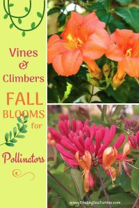Vines Climbers Fall Blooms for Pollinators #Vines #FallBlooming #FallBloomingVines #VinesForPollinators #PollinatorVines #FallFlowers #Gardening #FallisForPlanting