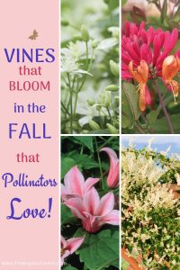 Vines that Bloom in the Fall That Pollinators Love #Vines #FallBlooming #FallBloomingVines #VinesForPollinators #PollinatorVines #FallFlowers #Gardening #FallisForPlanting