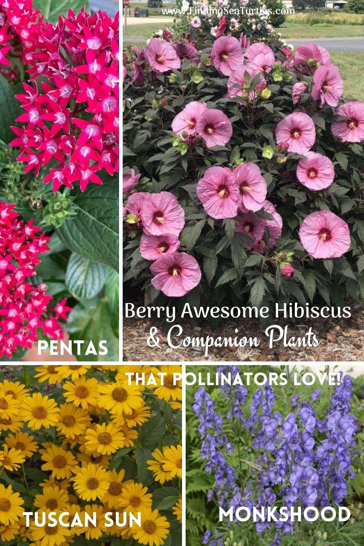 Berry Awesome Hibiscus Companion Plants that Pollinators Love #BeeFriendly #AttractsButterflies #Pollinators #GardeningforPollinators #OrganicGardening #SummerificWeek #SummerificHibiscus #WaltersGardens
