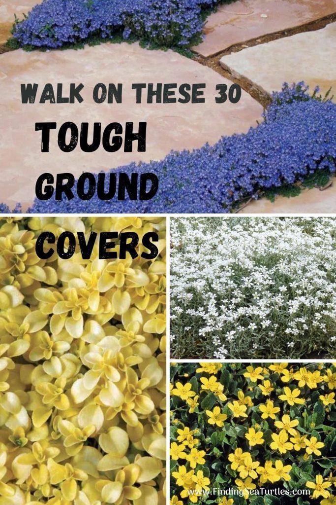 WALK ON THESE 30 Tough Ground Covers #FootTrafficPlants #LowGrowingPlants #FootTrafficTolerant #Gardening #PlantstoWalkOn #LawnSubstitute