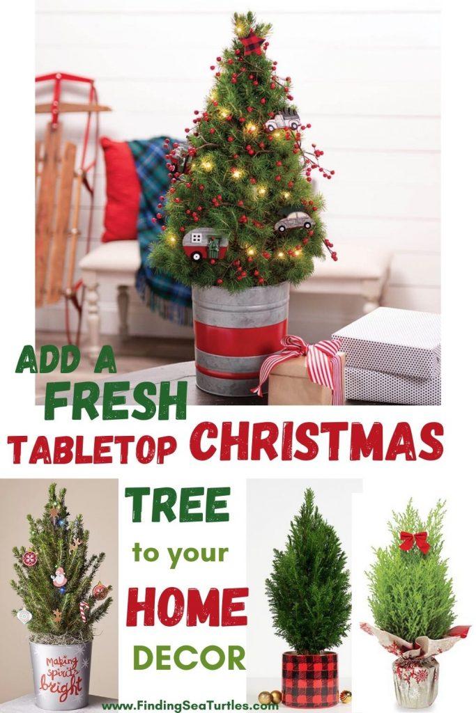 Fresh Tabletop Christmas Trees Add a Fresh Tabletop Christmas Tree to Your Home Decor #FreshMiniTree #MiniChristmasTree #TabletopChristmasTree #OnlineFlowers #ChristmasTrees #ChristmasTabletopTree