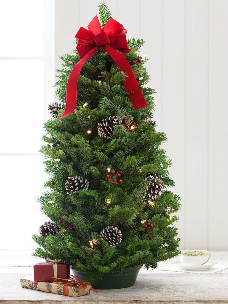 Traditional Decor Balsam Tabletop Christmas Tree by Vermont Country Store #FreshMiniTree #MiniChristmasTree #TabletopChristmasTree #OnlineFlowers #ChristmasTrees #ChristmasTabletopTree
